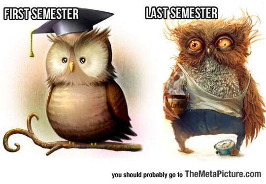 cool-owls-semester-studying-ruined