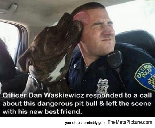 His New Best Friend