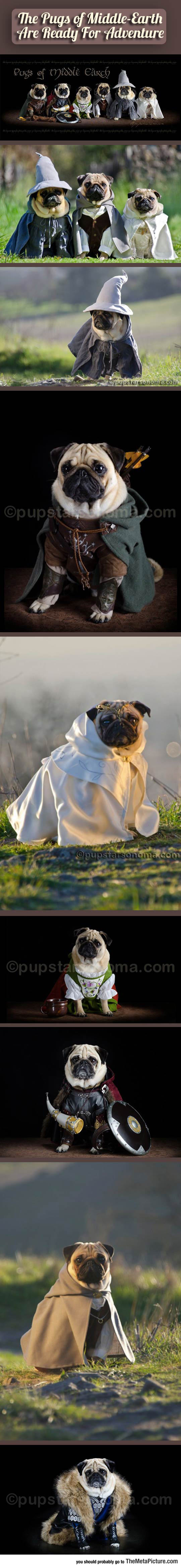 cool-pugs-Lord-Of-The-Rings-costumes
