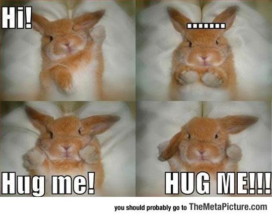 Angry Bunny Wants A Hug