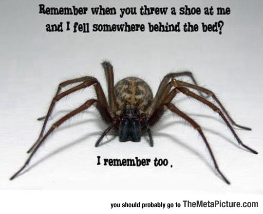cool-scary-spider-creepy