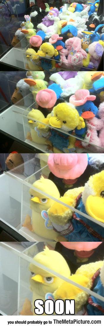 cool-teddy-machine-duck