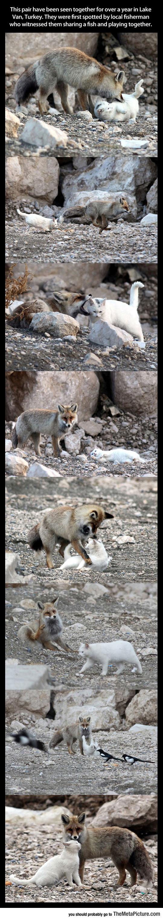 cute-cat-fox-friends-lake
