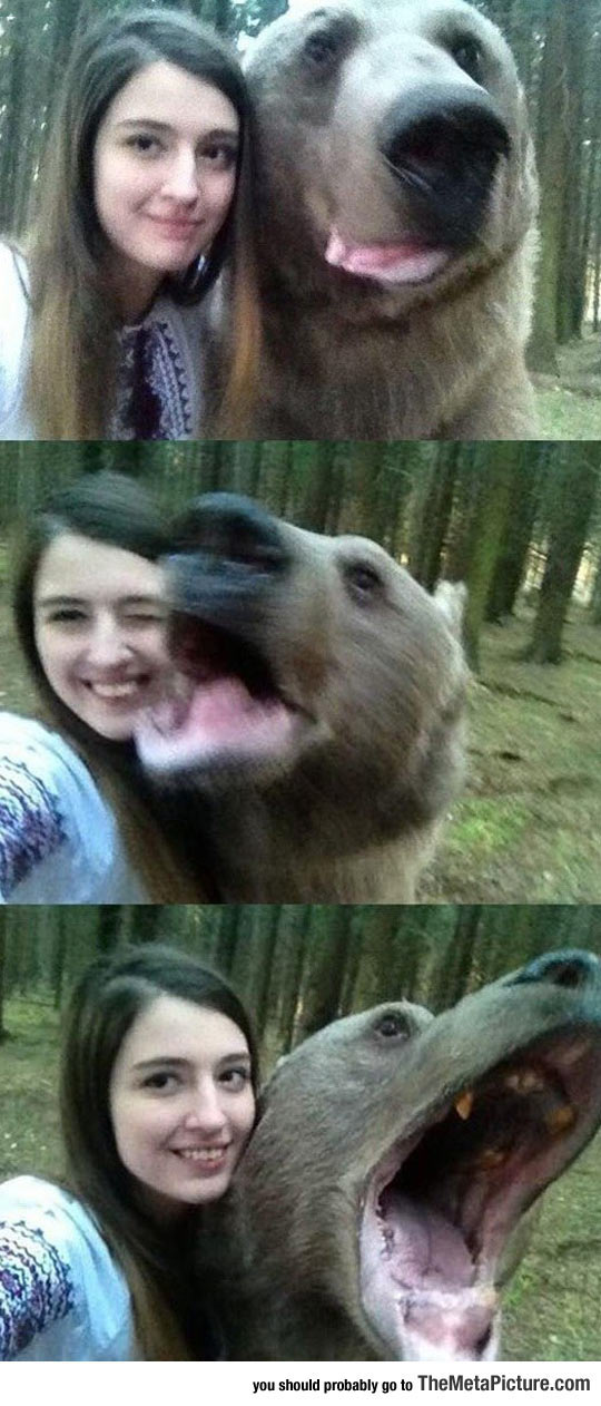 Bear Selfies In Russia Because Why Not?