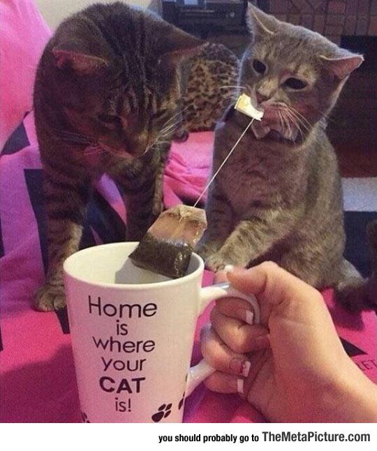 funny-cat-biting-tea-mug