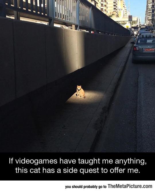 funny-cat-dark-light-beam
