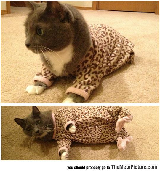 funny-cat-pajamas-cute