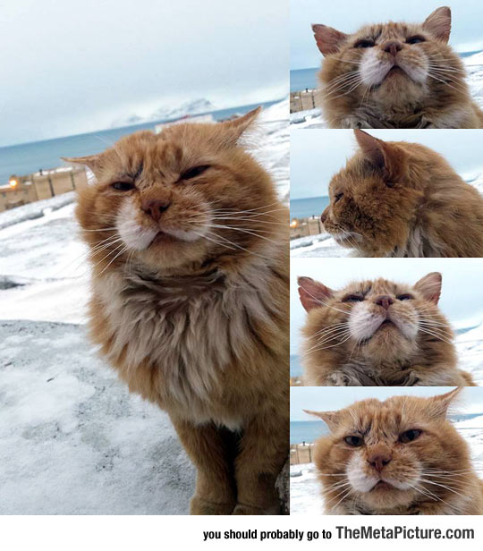 Cat From The Arctic Svalbard Archipelago