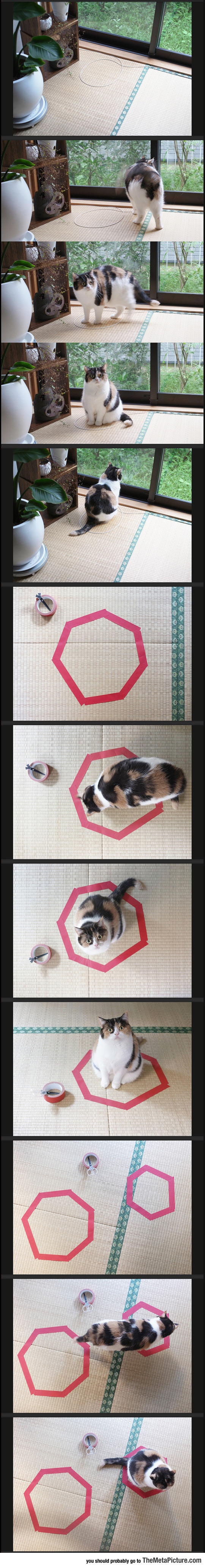 Trick Your Cat With A Circle