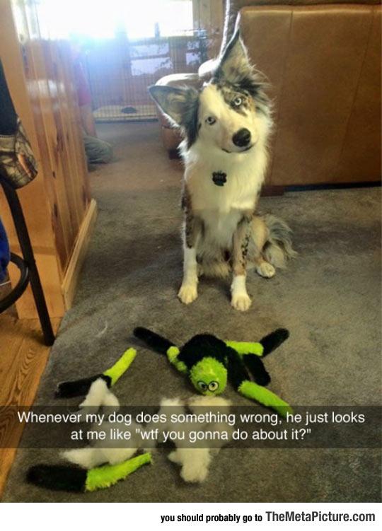 funny-dog-broken-toy-guilty