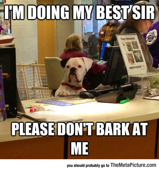 funny-dog-working-behind-counter