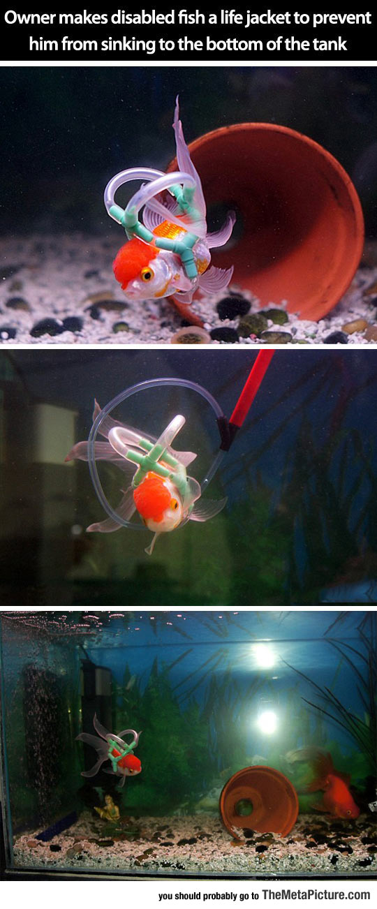 Einstein The Lucky Goldfish