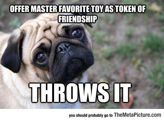 funny-pug-sad-face-meme