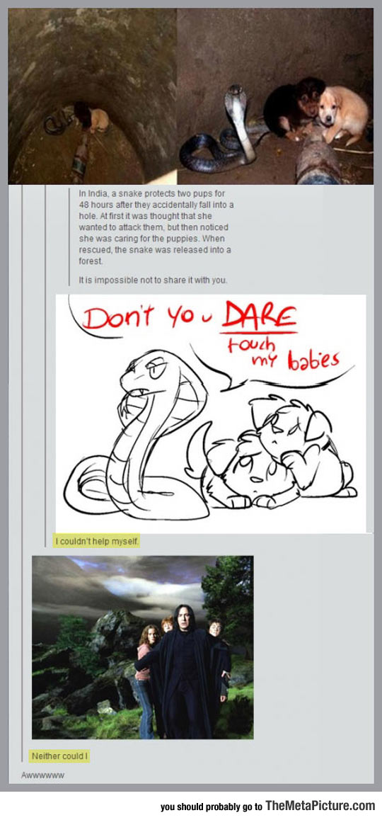 funny-puppies-snake-well