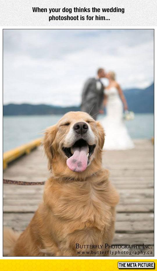 funny-wedding-photo-dog