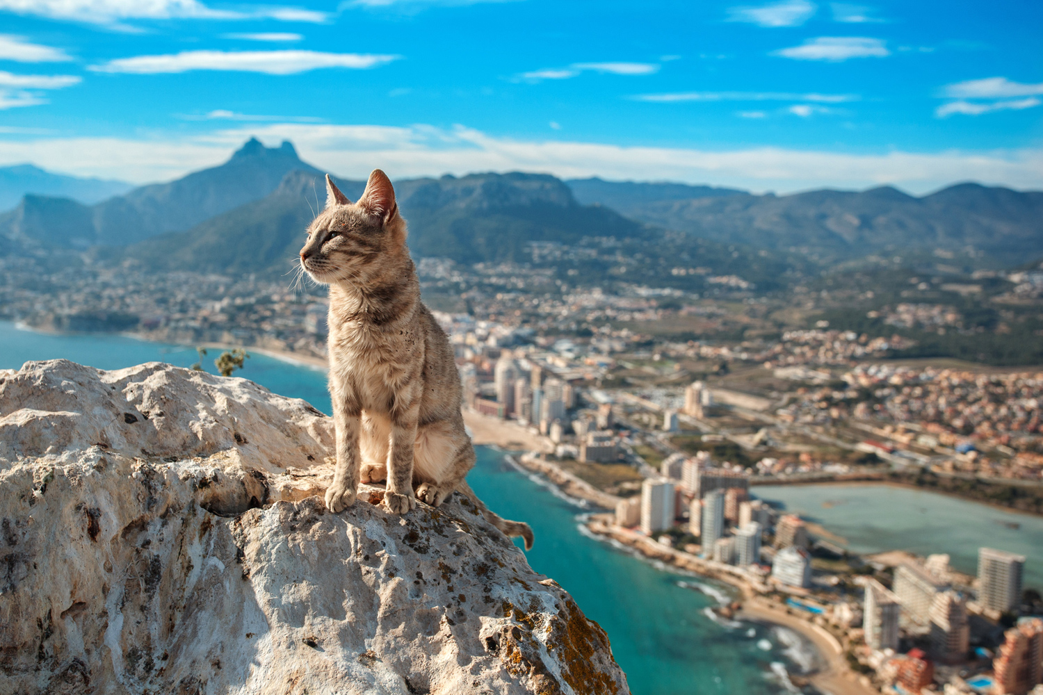 A cat sits majestically over the Spanish town of Calp.