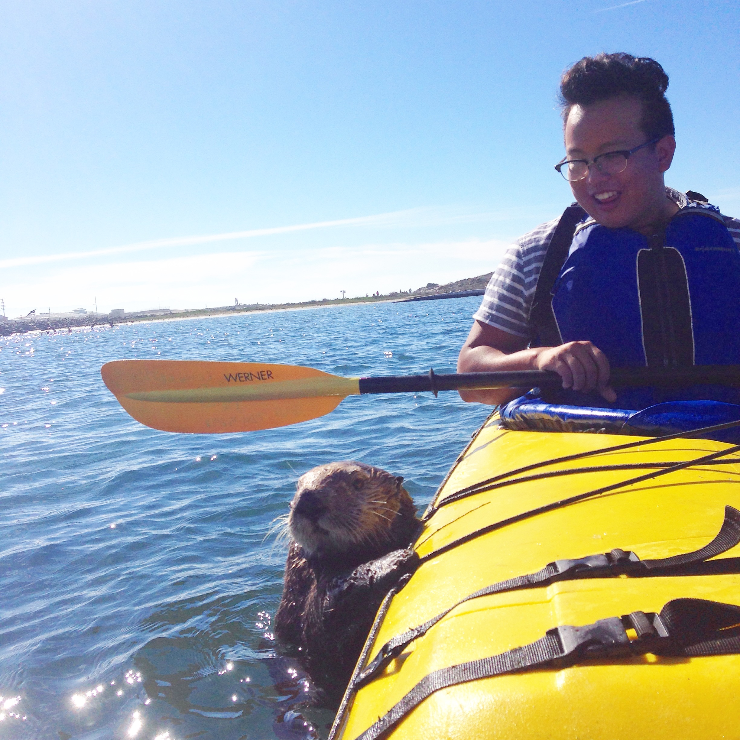 Curious sea otter swims up to a kayaker