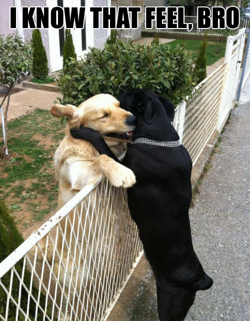 Dogs understand each other