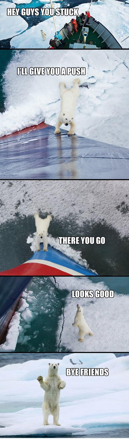 Friendly Polar Bear