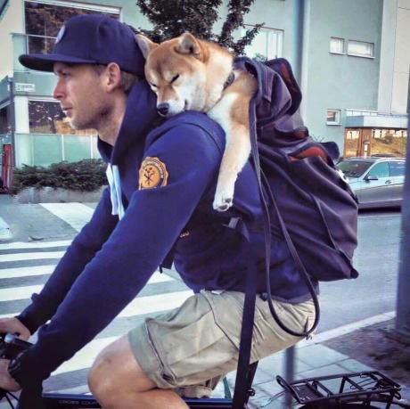 Shibe will be your backpack