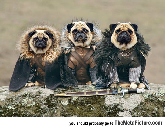 cool-Game-of-Thrones-dog-pug