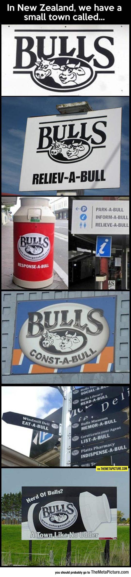cool-New-Zealand-town-bulls
