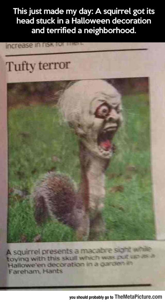 cool-Squirrel-Halloween-scary-mask