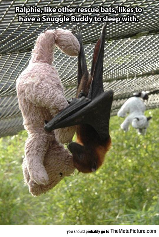 cool-Teddy-bear-bat-love
