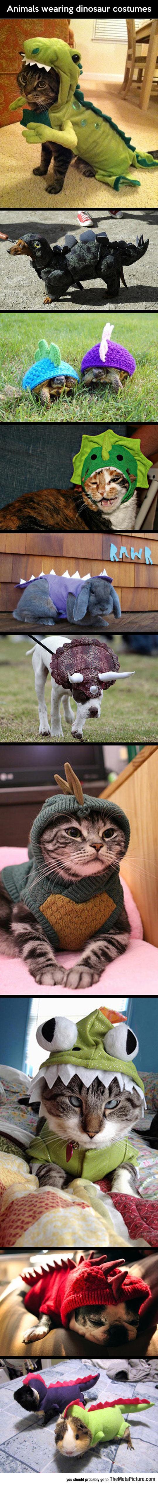 Animals In Dinosaur Costumes