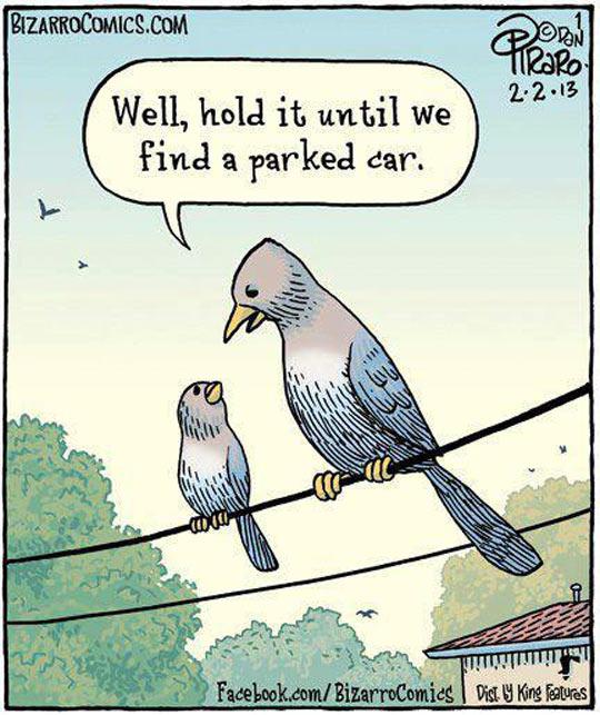 cool-bird-hold-poop-car
