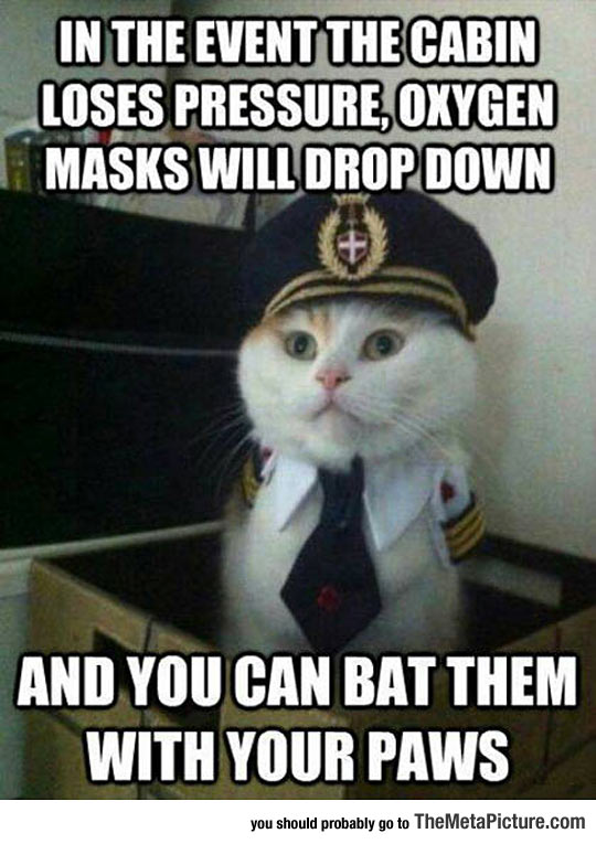 Captain Kitty Gives The Right Instructions