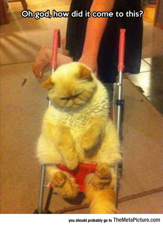 A Feline