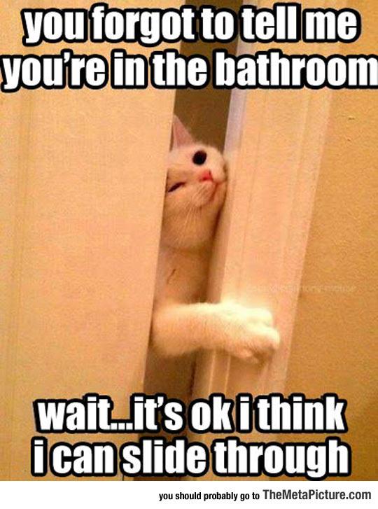 cool-cat-bathroom-enter-slide