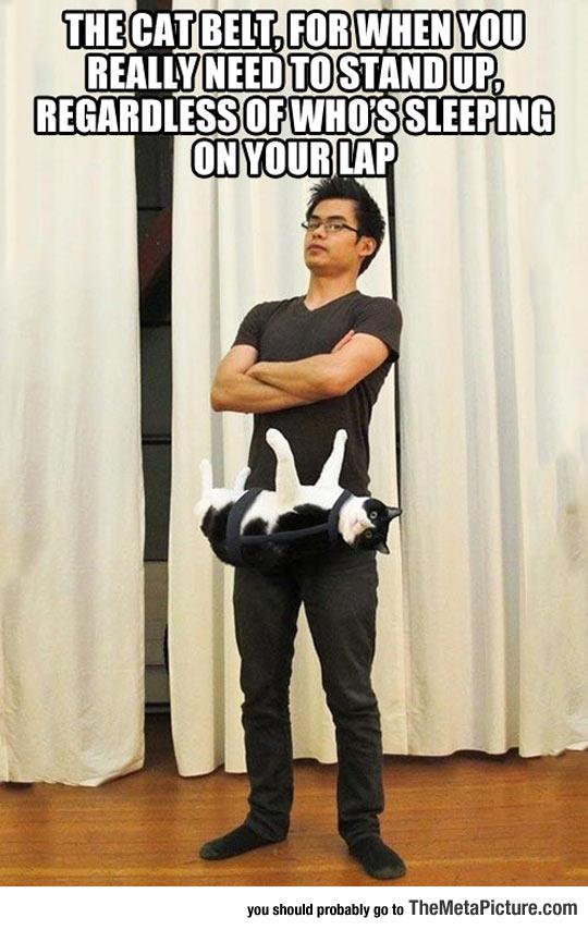 Cat Belt