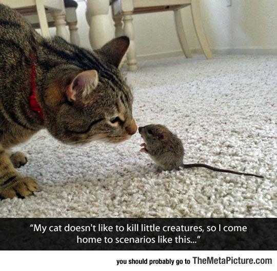 cool-cat-mouse-afraid