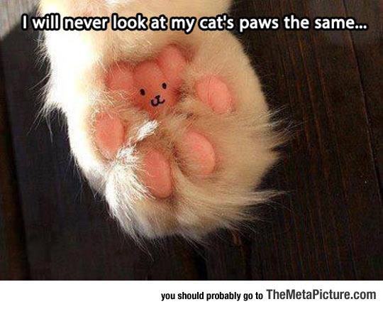 cool-cat-paw-little-bear