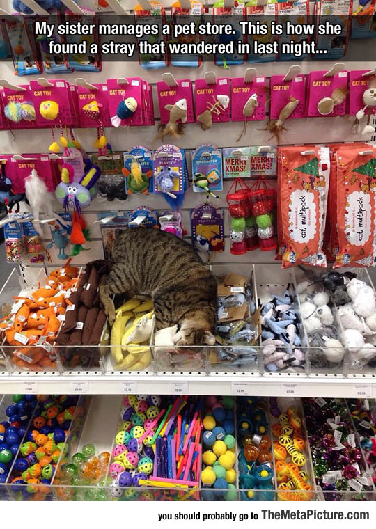 This Kitty Just Found Cat Heaven