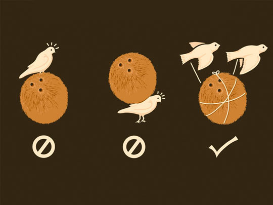 The Proper Way For A Swallow To Carry A Coconut
