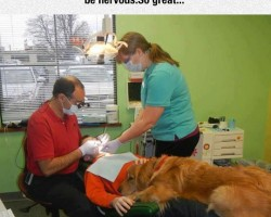 A Dentist Doing It Right
