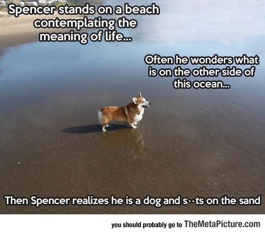 Spencer The Philosopher Corgi