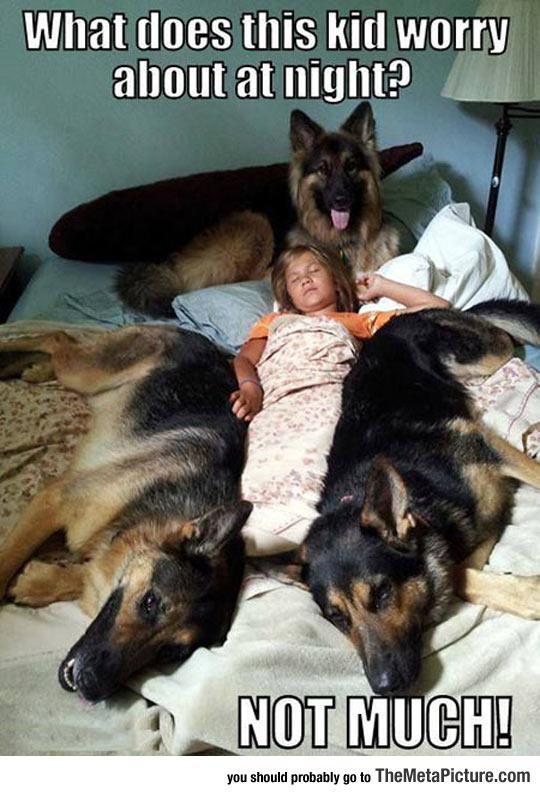 cool-dog-bed-night-child