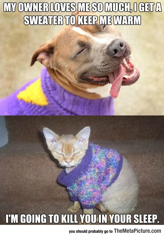 How Our Pets React To Sweaters