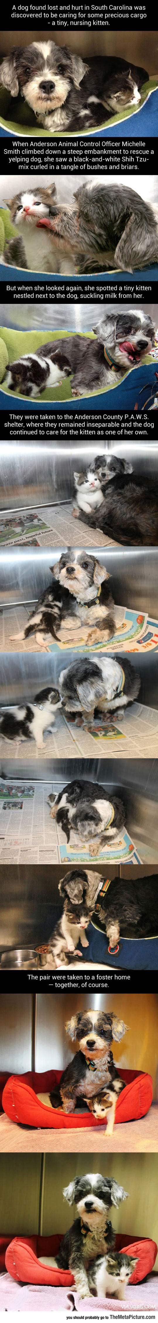 cool-dog-nursing-kitty-shelter