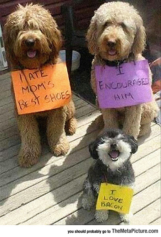 cool-dog-punishment-note