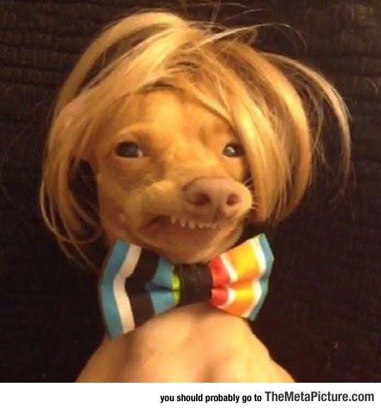 cool-dog-wig-bow-cute