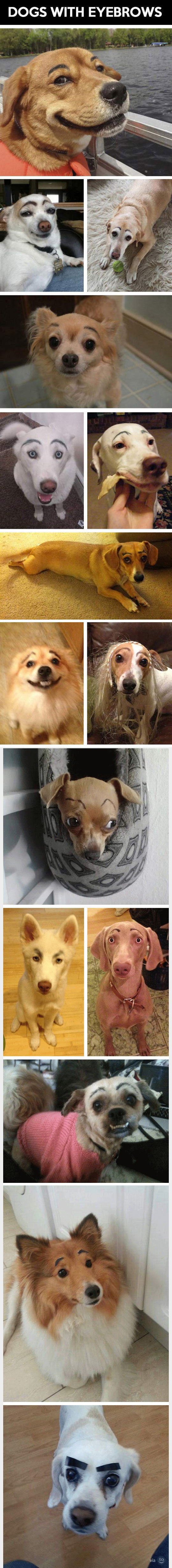 If Dogs Had Eyebrows