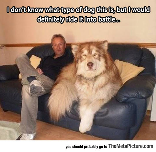 cool-giant-dog-sofa-battle