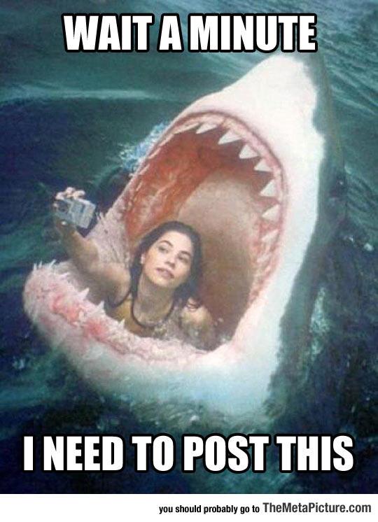 cool-girl-selfie-shark