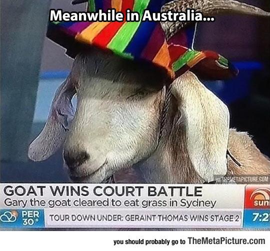 Australia Seems To Be A Weird Place