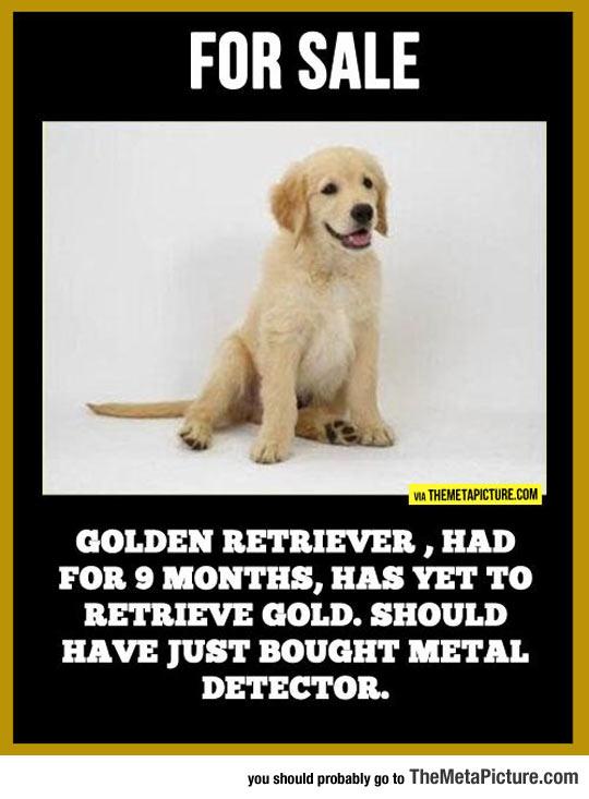 cool-gold-retriever-metal-detector